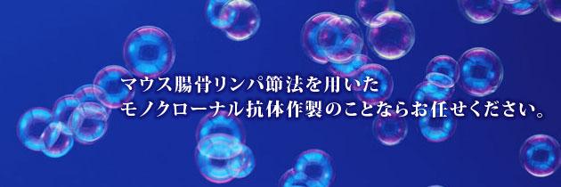 腸骨リンパ節法を用いたモノクローナル抗体作製は株式会社アイティーエム(ITM)にお任せください